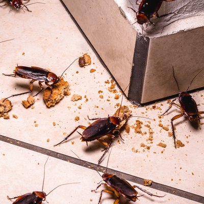 infestation of cockroaches indoors, photo at night, insects on the floor eating leftover food