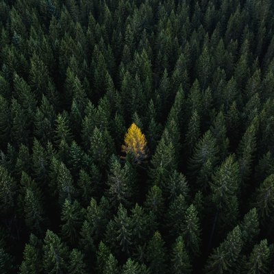 Aerial perspective of a single tree standing out from the crowd, Dolomites, Italy