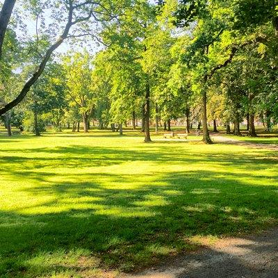 Trees On Grassy Landscape In Park