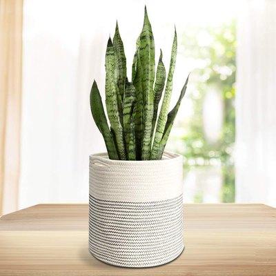 Rope Plant Basket