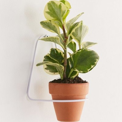 Aster Planter Holder