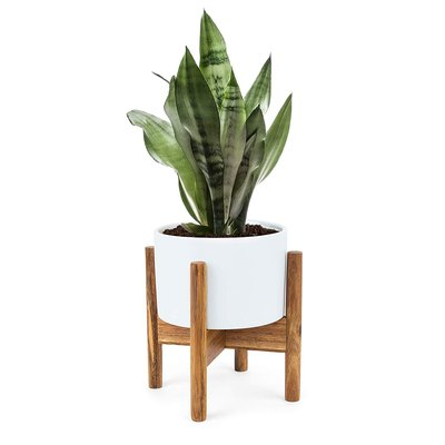 Modern Desktop Planter