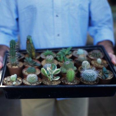 fix a cactus
