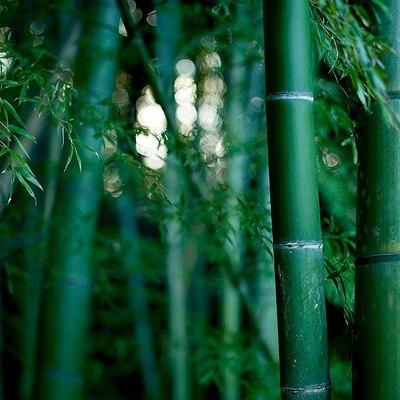 What Is the Best Way to Cut Down Bamboo Stalks?