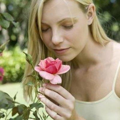 Are Roses Acid Loving Plants?