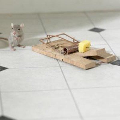 How to Set a Mouse Trap So a Mouse Cannot Steal the Bait