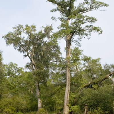 Why Don't Termites Eat Cypress?
