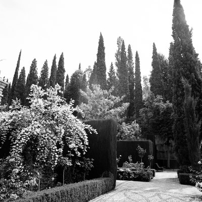 Proper Spacing Between Italian Cypress Trees
