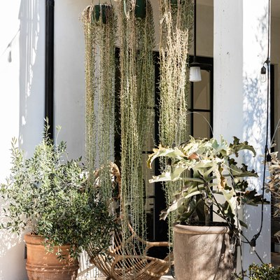 A porch with both potted and hanging plants