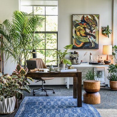 An office filled with houseplants