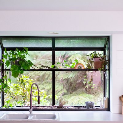 A plant by a kitchen window. Wood shelves with glasses, and a gold colander.