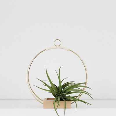 Plant Hanger (Small)