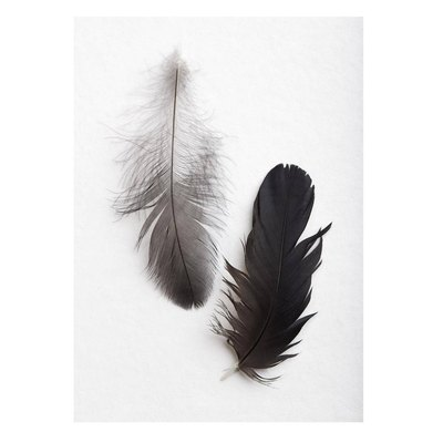 Crow Feather Print
