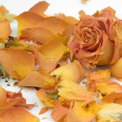 How to Dry Rose Petals Properly