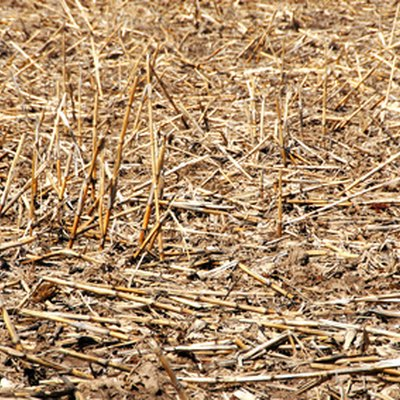 Why Do They Burn the Corn Stalks in the Field After Harvesting?