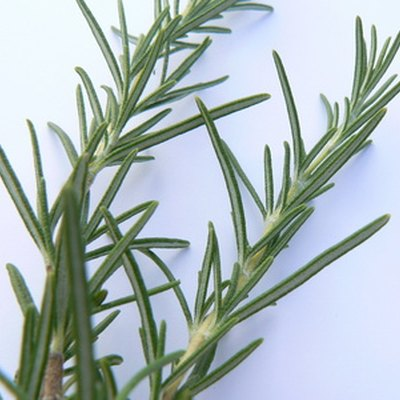How to Make Rosemary Potpourri