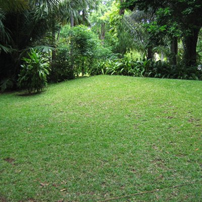 How to Dig Up a Lawn to Replant Grass Seed