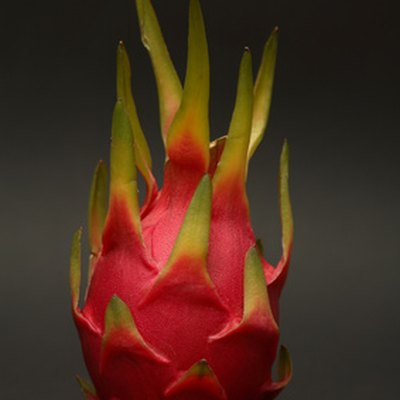 How to Induce Flowering in Dragon Fruit