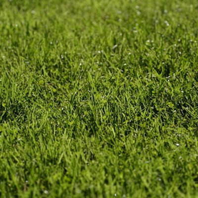 How do I Speed up Grass Seed Germination?