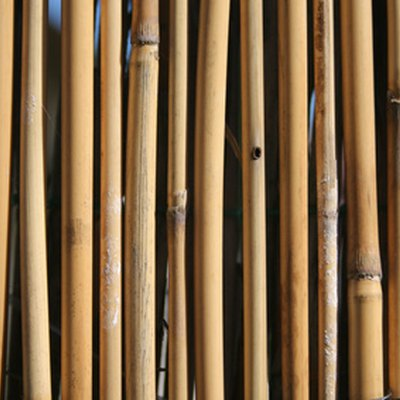 Difference Between Reed & Bamboo Fence