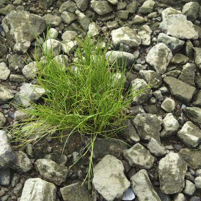 How to Grow Grass on Gravel