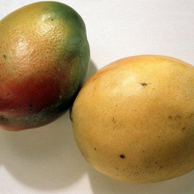 How Long Do Mango Trees From Seedlings Bear Fruit?