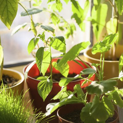 Potted green plants on window sill indoors