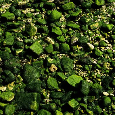 How to Kill Moss on Gravel