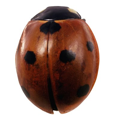 What Do the Spots on a Ladybug Mean?