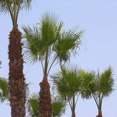 How to Make a Palm Tree Smooth