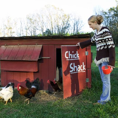 How to Cover Up a Chicken Coop Smell