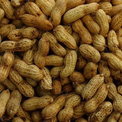 Can You Fertilize With Peanut Shells?