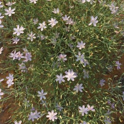 How to Grow Wildflowers Indoors
