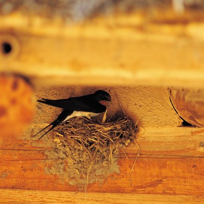 How to Stop Birds From Building Mud Nests on My Porch