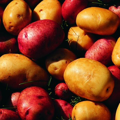 How to Grow Potatoes in Aquaponics