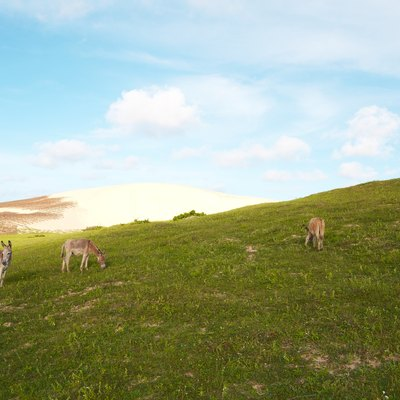 Landscape with grass, blue sky, sand dune and donkeys