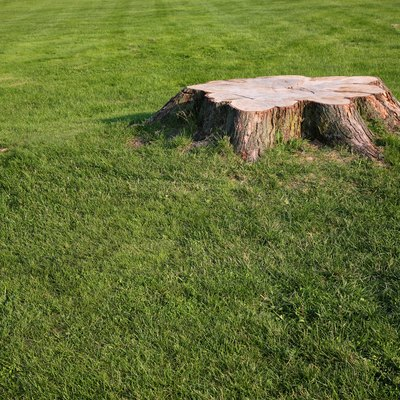 How to Make Your Own Stump Grinder