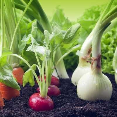When to Plant Vegetables in Alabama?