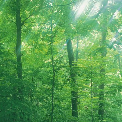 Forest with sunlight filtering through