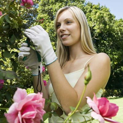 Can You Burn Wood From a Rose Bush?