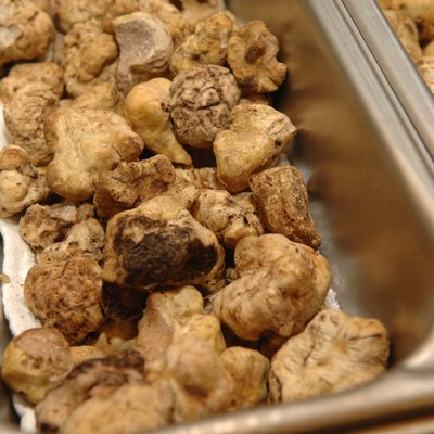 How to Grow White Truffles
