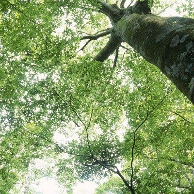 Low angle view of a tree. Kuju, Oita Prefecture, Japan