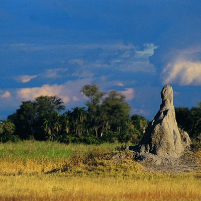 How to Determine Termite Mounds in a Yard