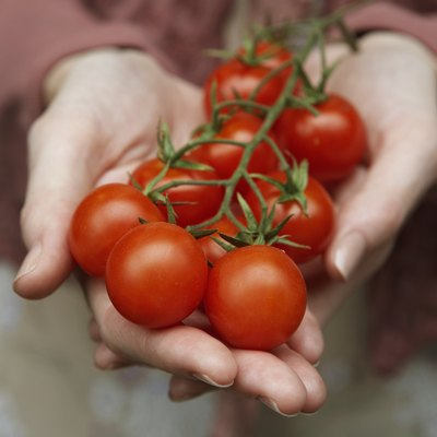 How Much Will One Acre of Tomato Plants Yield?