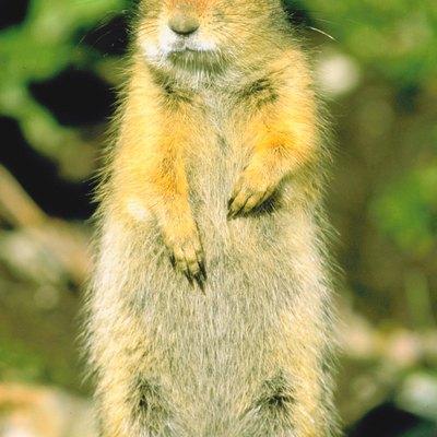 Do-It-Yourself Shepherd's Hook & Squirrel Baffle