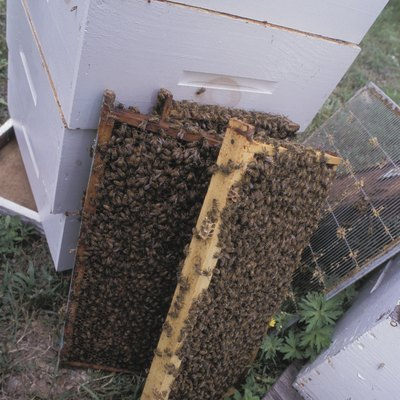 How to Kill Wax Worms in a Beehive