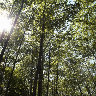 Sunlight coming through forest canopy.
