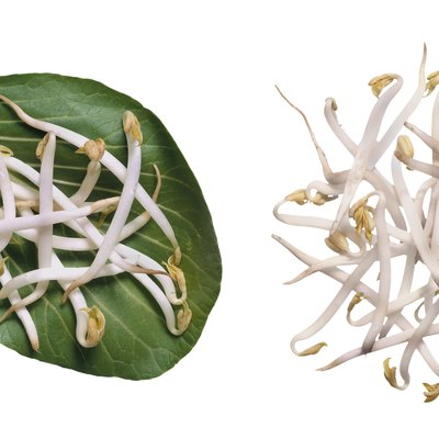 How to Grow Large Mung Bean Sprouts