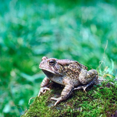 Do Mothballs Repel Toads and Frogs?