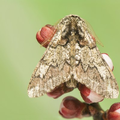 How to Get Rid of Moths Outside